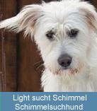 Ein Schimmelsuchhund wird nur eingesetzt bei Verdacht auf Schimmel in geschlossenen Räumen.